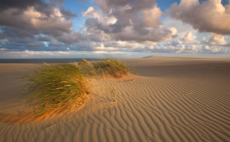 White sand dunes of the Curonian Spit